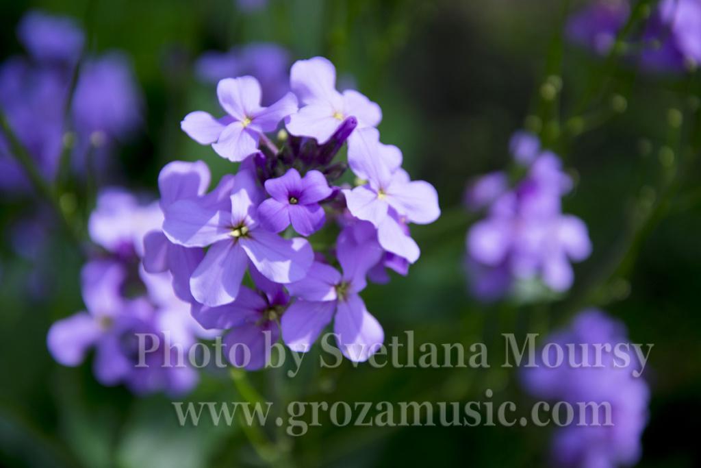 Svetlana Moursy's Summer Etudes in Violet